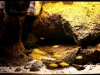 AGA 2010 - Locul 2 la categoria Biotope Aquascape