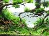AGA 2010 - Locul 1 la categoria Aquatic Garden Extra Large