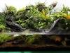 AGA 2011 - Locul 3 (Paludarium) Luidi Rafael de Souza Doim