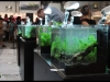 Barcelona Aquarium Meeting 2011 - Concursul de nano-aquascaping live
