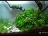 Barcelona Aquarium Meeting 2011 - Locul 3