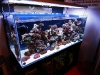 Barcelona Aquarium Meeting 2011 - Amenajarea acvariului marin