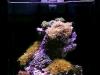 Ecoxotic Ecopico reef 2