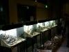 Iwagumi challenge @ Nature Aquarium Party 2011 - mai multe layouturi