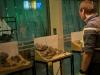 Iwagumi challenge @ Nature Aquarium Party 2011 - un layout (2)