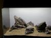 Iwagumi challenge @ Nature Aquarium Party 2011 - un layout (4)