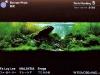 IAPLC 2011 World Ranking 5 @ Nature Aquarium Party 2011