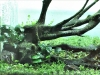 Takashi Amano's Layout Making - Plantare