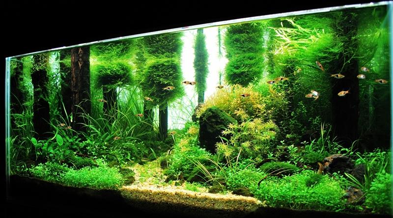 aqua news - Josh Sim, interviu aquascaping II