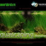 Concurs Aquscaping Romania