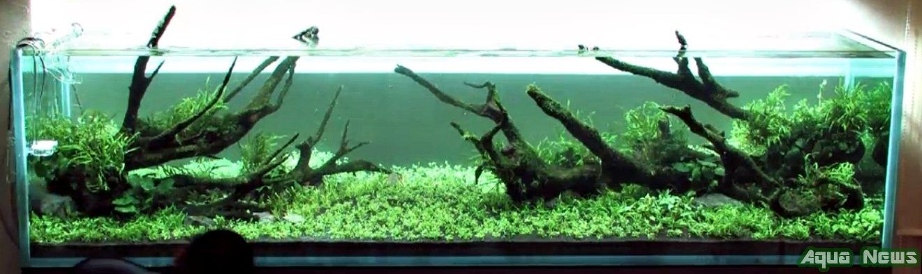 Takashi Amano's Layout Making - Aquascape